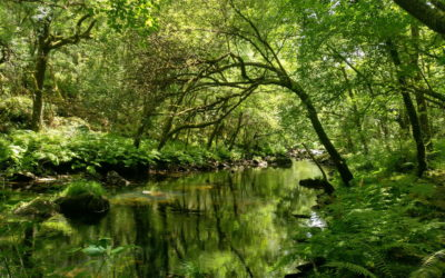 Circular del Río Mandeo